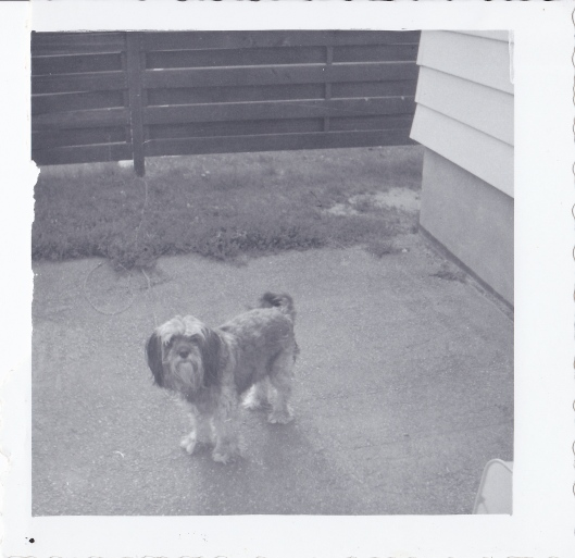Rags was the first dog of my Aunt's that I remember.  This was taken in Flint at her old home.