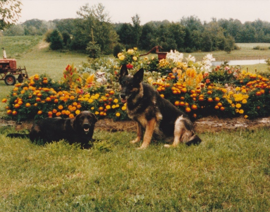Caption by Aunt Georgia:  small - Walter  German Shep. LitskaRemember the covered pump I mentioned in the construction picture?  Here it is, cover removed and built into a raised planter.